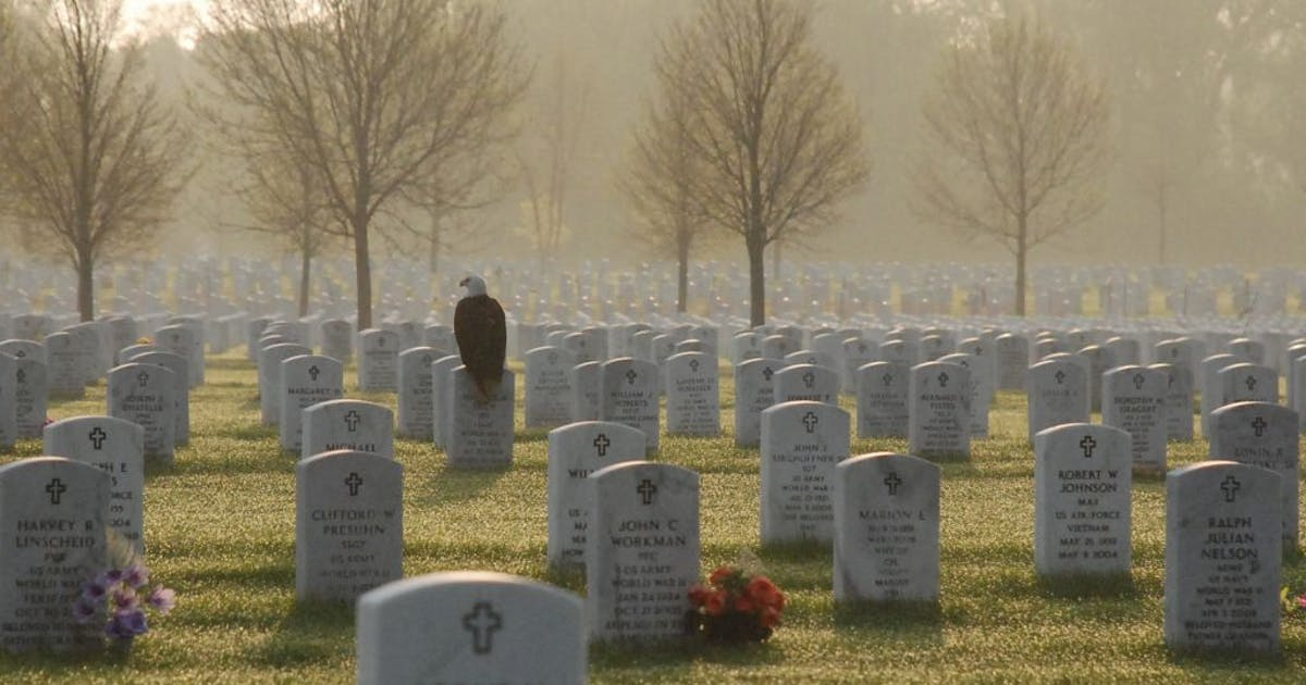 Bald Eagle standing guard, over Fort Snelling National Cemetery.jpg