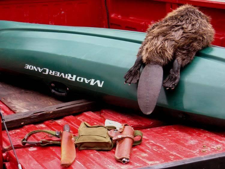 beaver hunt 2.jpg