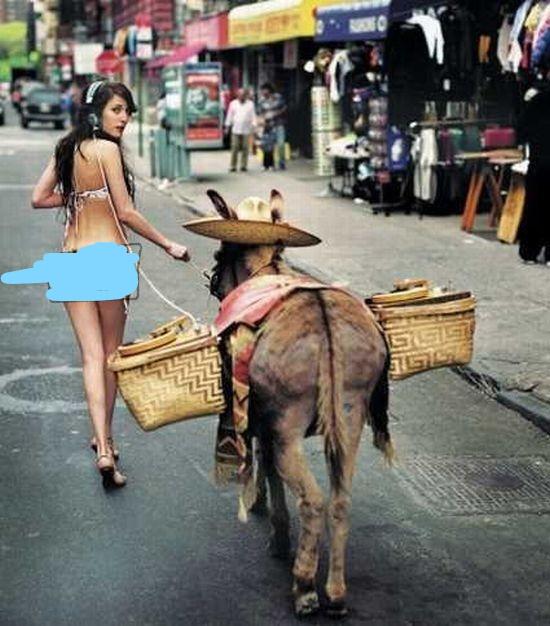 bikini-girl-with-donkey_LI.jpg