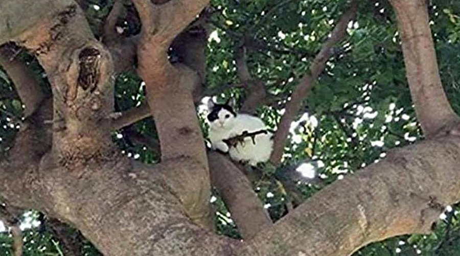 Cat In Tree With Rifle.jpg