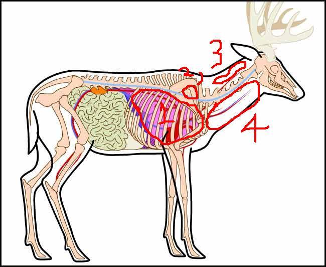Deer Shoulder Shot Gun And Game The Friendliest Gun Discussion