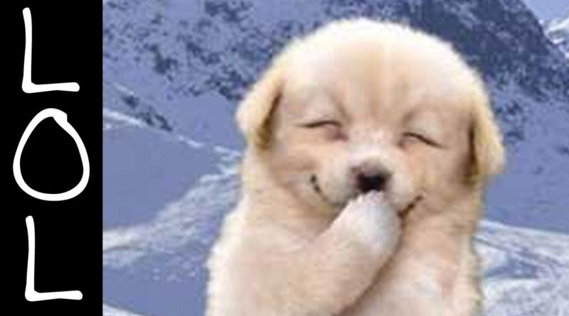 funny-dog-pic-800x445.jpg
