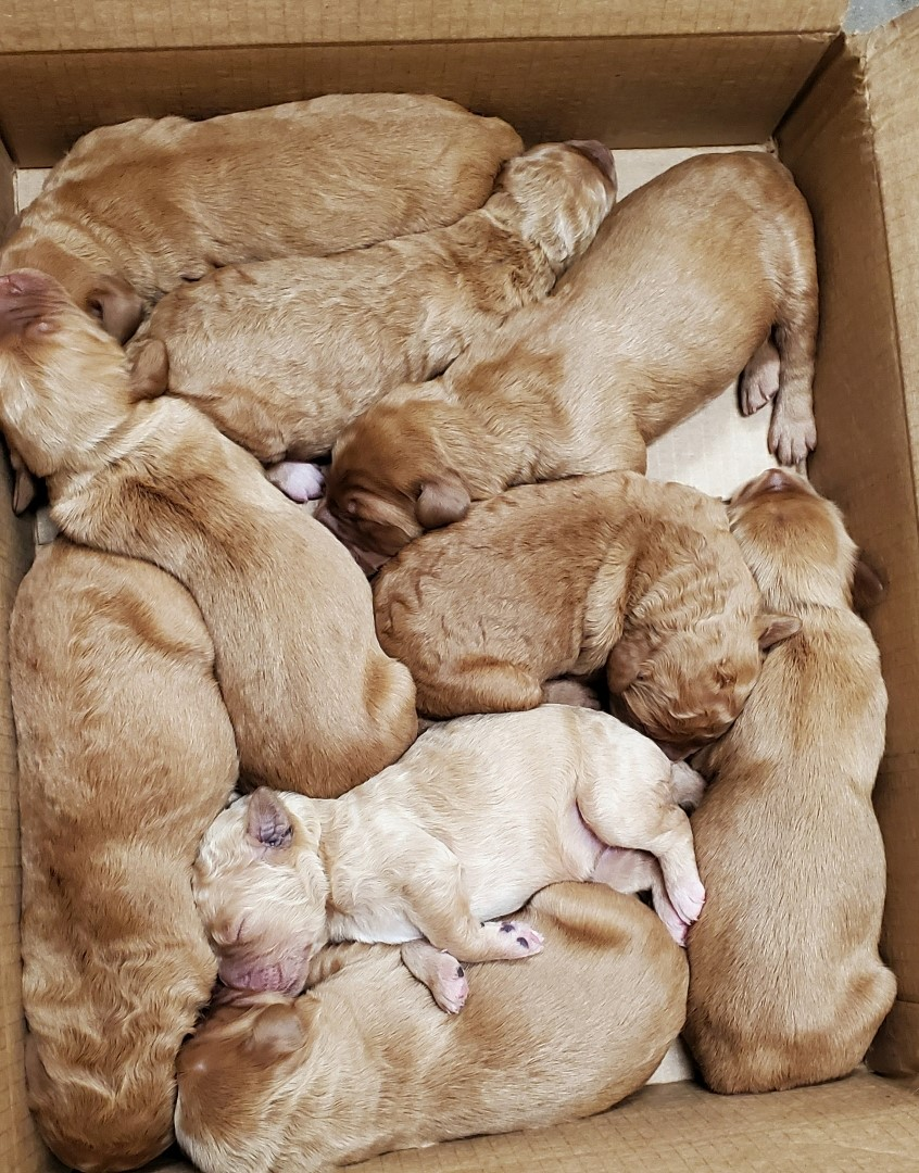 puppies3.jpg