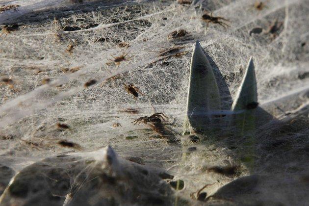 spider wad2.jpg