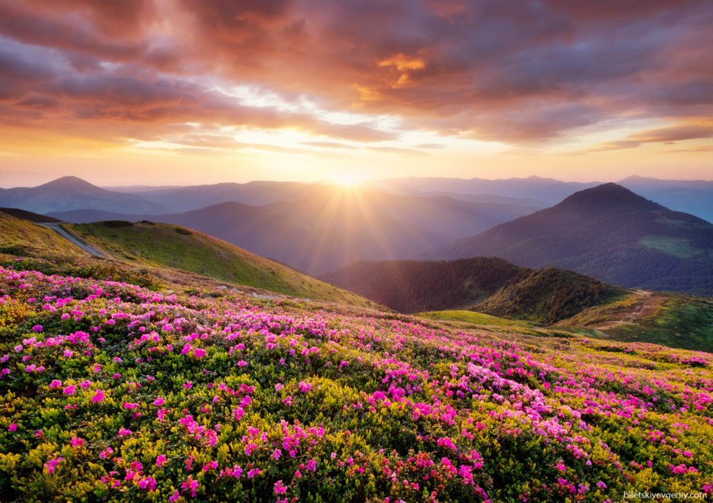 Summer Mountain - Carpathian, Ukraine..jpg